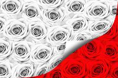 Many roses, black and white color. Open Royalty Free Stock Image
