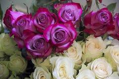 Many roses Stock Photos