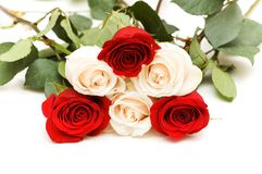 Many roses isolated on the white background Royalty Free Stock Photography
