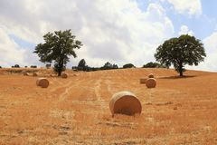 Many round haystacks on dry yellow field at hills, Tuscany, Ital. Many round haystacks on dry yellow field at hills on a sunny day, Tuscany, Italy royalty free stock images