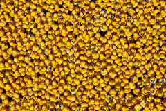 Many Rubber Ducks Stock Photos