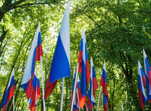 Many russian flags in the city park Royalty Free Stock Image
