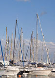 Many sailboats pleasure boaters Stock Image