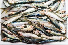 Many sardines in an ice box Royalty Free Stock Photo