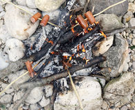 Many sausage cooking in the fire at summer camp Royalty Free Stock Image