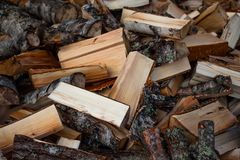 Many sawed and chopped birch stumps Stock Images