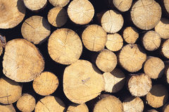 Many sawed pine logs in stack Royalty Free Stock Photos