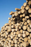 Many sawed pine logs in stack Royalty Free Stock Images