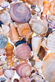 Many sea shells Stock Photos