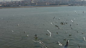 Many seagull flying in sea,reef,Seaside dams of QingDao city. stock video footage