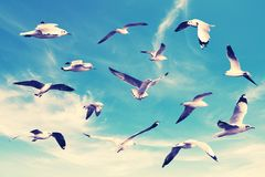 Many seagull flying among on the sky royalty free stock photo