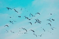 Many seagull flying among on the sky stock images