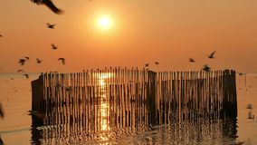 Many seagulls flying around the stall in the sea at the sunset stock video footage
