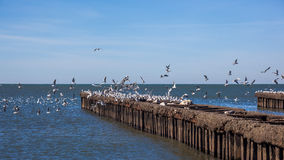 Many seagulls flying and sitting on the water and on the rocks o Royalty Free Stock Photography