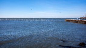 Many seagulls flying and sitting on the water and on the rocks o Royalty Free Stock Photo