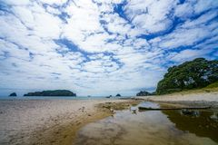 Seagulls at hahei beach, coromandel peninsula, new zealand 2 Royalty Free Stock Photos