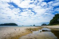 Seagulls at hahei beach, coromandel peninsula, new zealand 3 Royalty Free Stock Photography