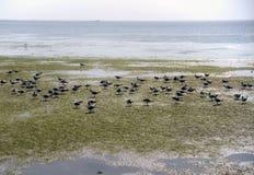 Many seagulls at shore stock photography