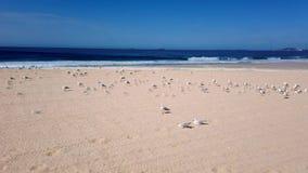 Seagulls on Yellow Sand Australian Beach. Many seagulls sitting on a yellow sand Pacific Ocean beach, NSW South Coast, Australia stock video