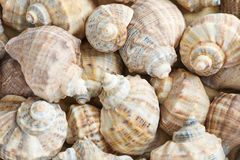 Many seashells as background, space for text royalty free stock photo