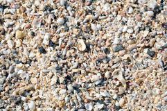 Many seashells on the beach. stock photo