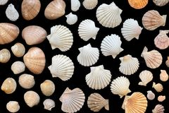 Seashells  on black background Royalty Free Stock Images