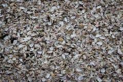 Many seashells chaotically lie on the shore stock photos