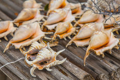 Many Seashells conch in a market Stock Images