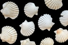Seashells isolated on black background Stock Photo