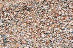 Many seashells piled together Stock Photo