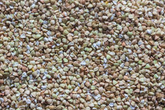 Many seeds of green buckwheat (may be used as background) Royalty Free Stock Photography