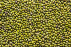 Many seeds of mung bean (may be used as background) Stock Images
