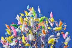 Feathers in the sky Stock Images