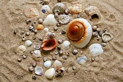 Many shells. On the sand Royalty Free Stock Images