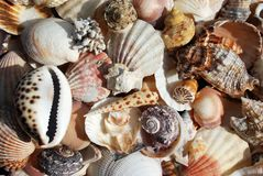 Many shells Royalty Free Stock Photos