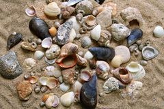 Many shells. On the sand Stock Image