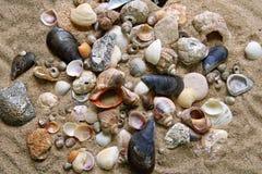 Many shells Stock Image