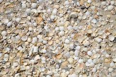 Many shells on the beach Stock Photo