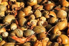 Shells. Many shells def or seashell stock photo