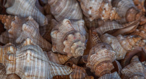 Many shells Royalty Free Stock Photography