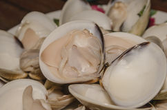 Many shells. Steamed Clams in a Bowl Ready to Eat Stock Photos