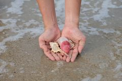 Many shells on woman`s hands. By the sea royalty free stock photography