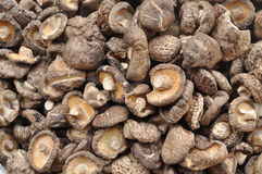 Many Shiitake Mushroom Dried Stock Photography