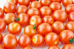 Many shiny Cherry tomatoes Stock Image