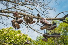 Many shoes hanging in tree , used sneakers.  stock photos