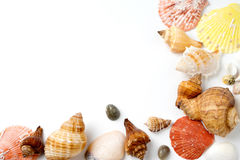 many size of sea shell on white Stock Images