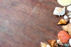 many size of sea shell on wood Royalty Free Stock Photos