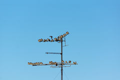 Many small birds sitting on wires Stock Images