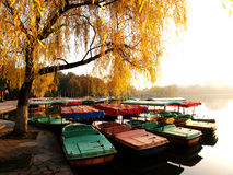 Many small boats stock images