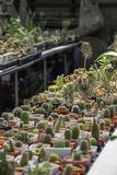 Many Small Cactus For decorative plant on table royalty free stock photo